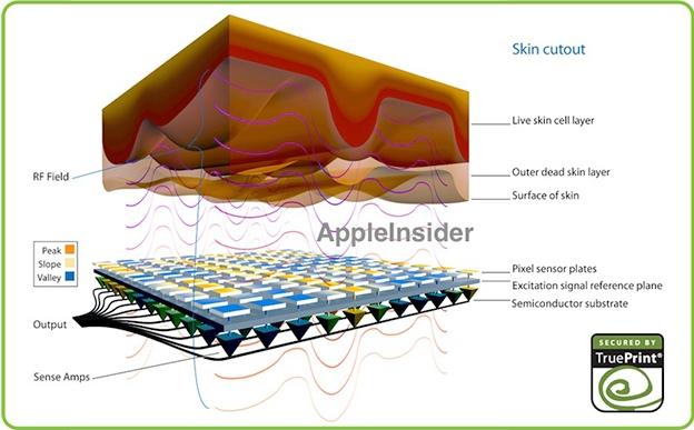 The latest rumors for iPhone 5S suggest the integration of biometric technology for fingerprint scanner